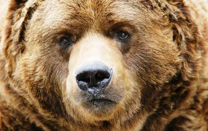 synthetic diamonds bear